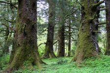 Slike prirode - Šume, planine i more - Kompilacija 1 - slika 1