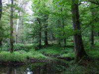 Slike prirode - Šume, planine i more - Kompilacija 1 - slika 3