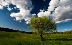 Slike prirode - Šume, planine i more - Kompilacija 1 - slika 4