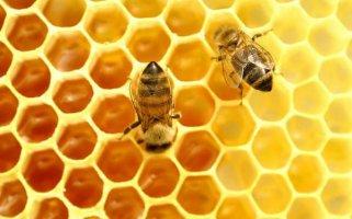 Priča o pčelama i medu