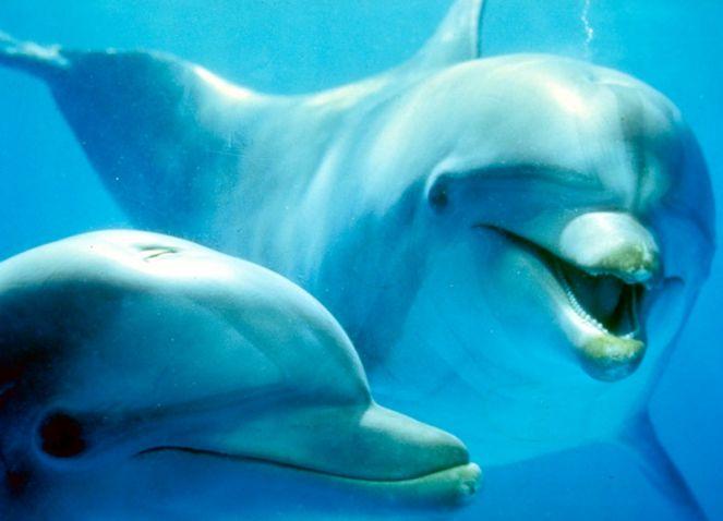 Da li znate koliko zuba ima delfin?