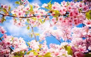O proleću