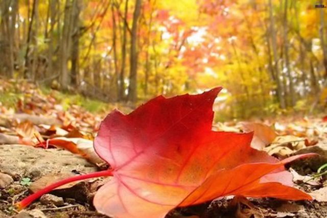 Јесења равнодневица - Jesenja ravnodnevica