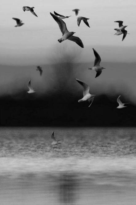 Kad mladost prohuji, šta činite ptice? - Desanka Maksimović