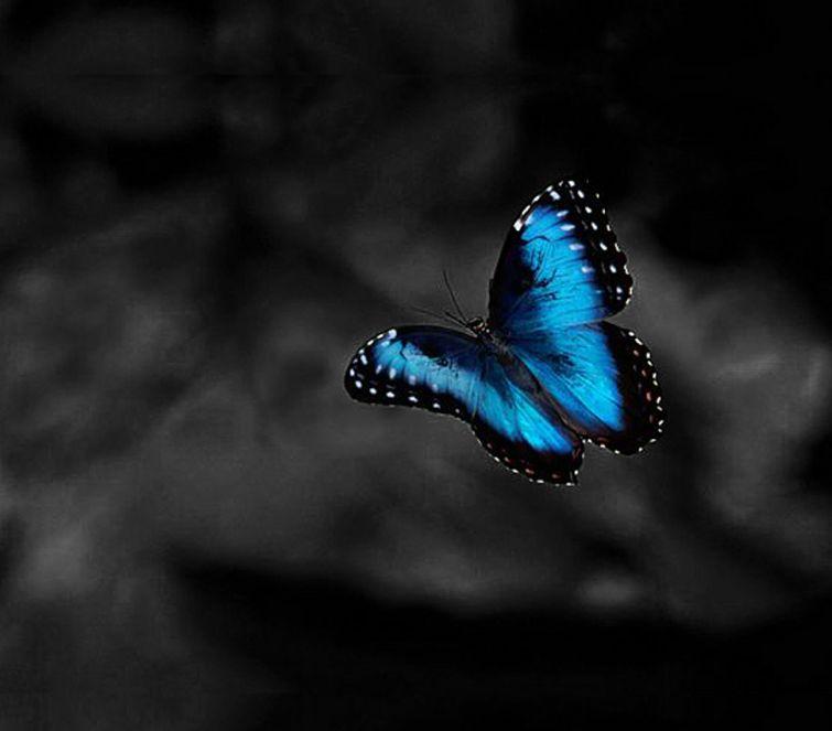 Plavi leptir - Herman Hese