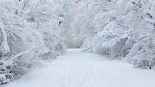 Zašto je sneg beo?