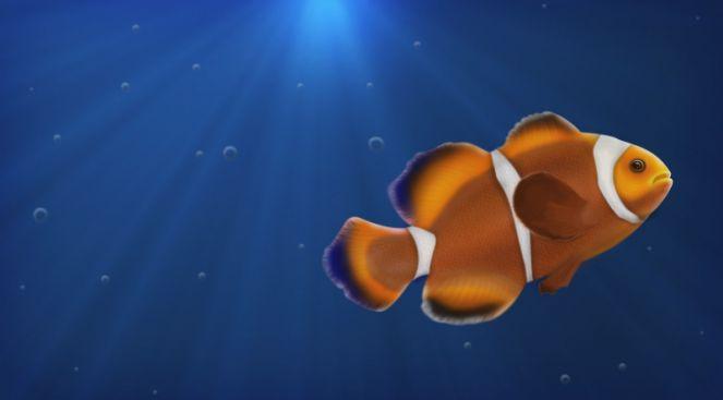 Riba klovn
