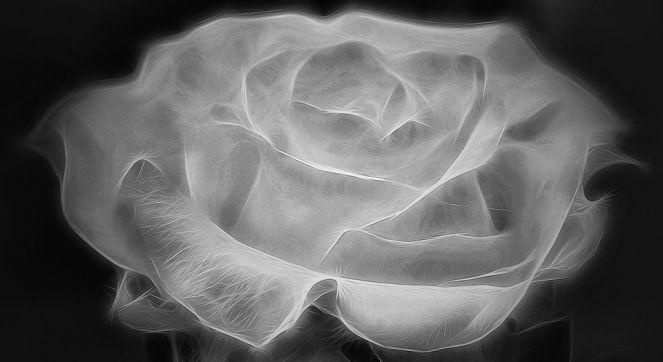 Poslednja ruža - Laza Kostić